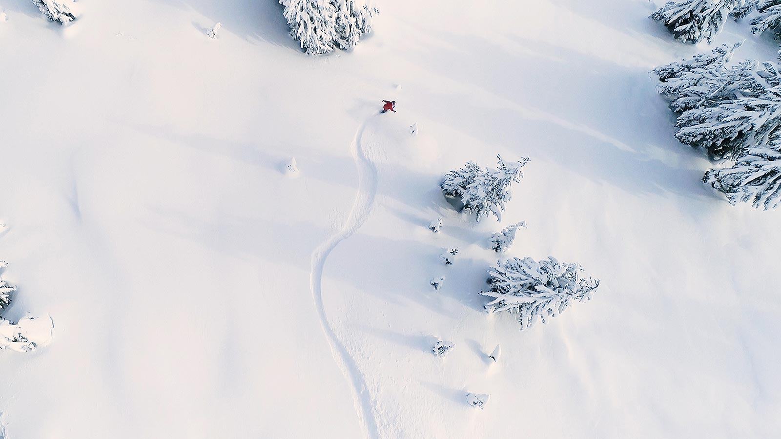 Aerial photograph of a skier off-piste in deep snow